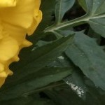 cropped-Bagdad-Spring-2013-Insect-on-Flower1.jpg